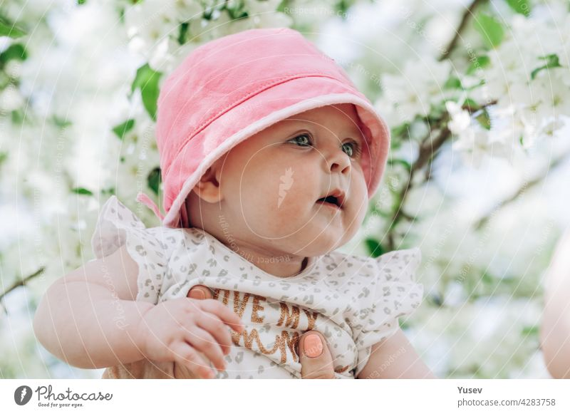 Portrait of a cute baby girl with blue eyes in a pink hat. Close-up. Soft focus. Happy childhood concept. Life style photography. Blooming apple trees spring background. Sunny day