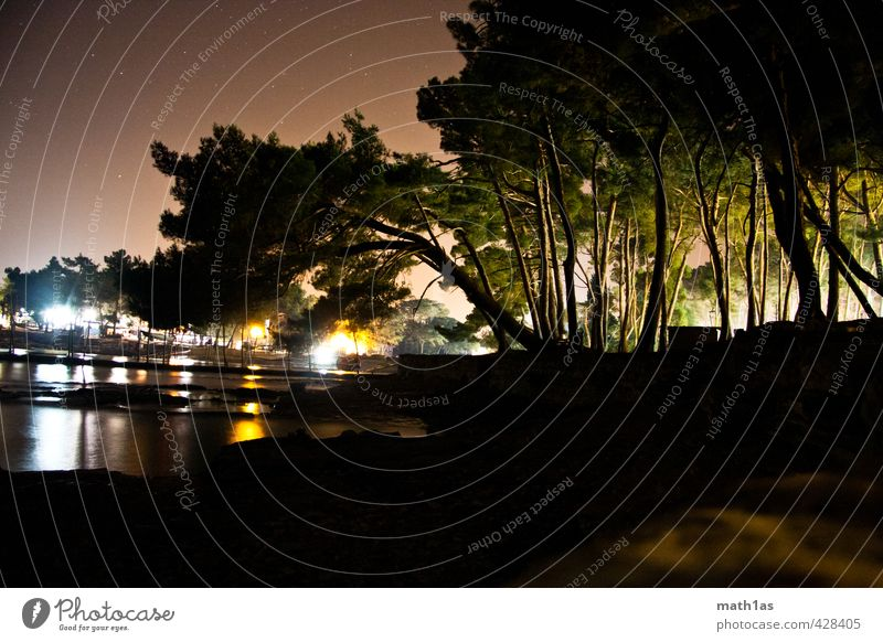 Night Trees Harbour Nature Water Ocean Adventure Croatia Colour photo Exterior shot Copy Space right Copy Space bottom Shadow Silhouette Reflection