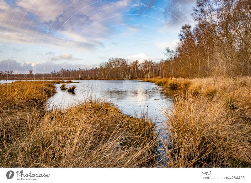 At the edge of a lake in the Himmelmoor near Quickborn Bog sky moor Nature Marsh Landscape Environment Deserted Day Water Pond Lake Reflection Lakeside Calm