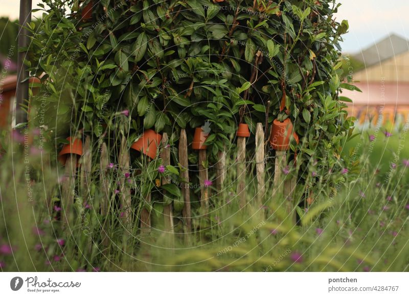 Wild growth. A wooden fence decorated with flower pots in front of a field Fence Wooden fence Nature Horticulture shrub Field Plant Country life laths