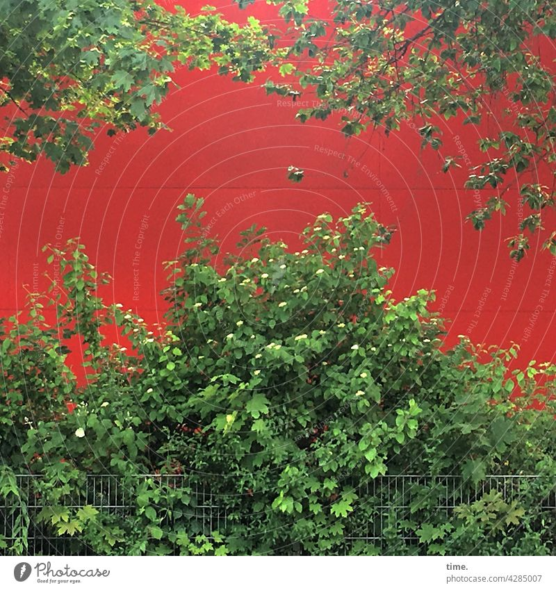 Stories from the fence (103) bush Wall (building) Fence Tree Branch Growth Leaf leaves Red Green wax colors Contrast luscious Protection back wall Illuminate