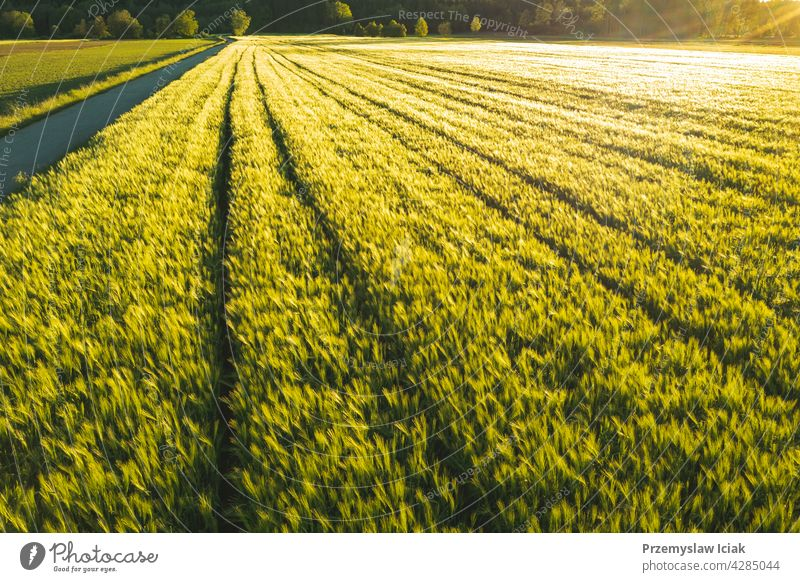 Green field in rural area. Landscape of agricultural cereal fields. aerial food cultivation young ploughing pattern farming summer texture nature sun spring