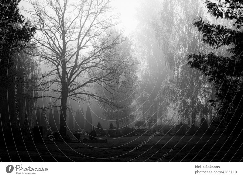 view on a graveyard with morning fog with tombstones and nobody there and grass and trees in spring cemetery Religion and faith dead cross Transience Funeral