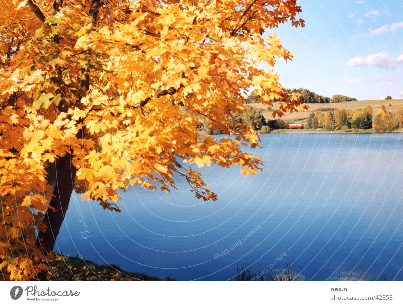 A day in autumn Sun Nature Landscape Water Sky Clouds Sunlight Autumn Beautiful weather Tree Leaf Forest Lakeside Pond Natural Blue Brown Gold Orange Turquoise
