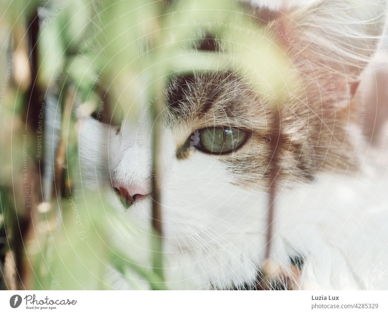 In the green: a green cat's eye behind light bamboo leaves Green Cat cat portrait mackerelled Bright sunny Pelt Domestic cat Whisker Long-haired Lynx Ears Pet