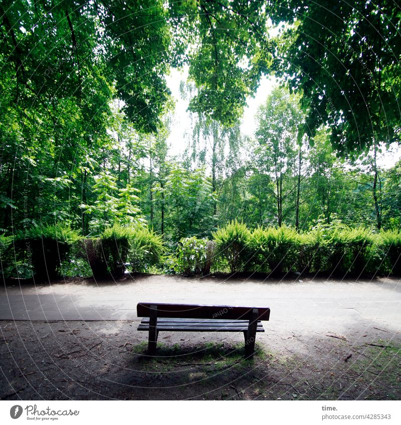 time-out bench Bench Footpath bush Tree Branch Growth Leaf leaves wax luscious Protection Illuminate blossom off Sidewalk Empty Lonely forsake sb./sth. Free Old