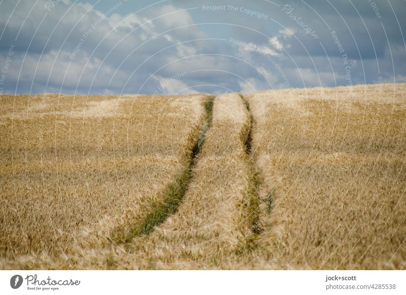in the cornfield Landscape Clouds Sky Wheatfield Summer Rut Authentic Long Warmth Symmetry Lanes & trails Panorama (View) Agriculture Ecological Grain field