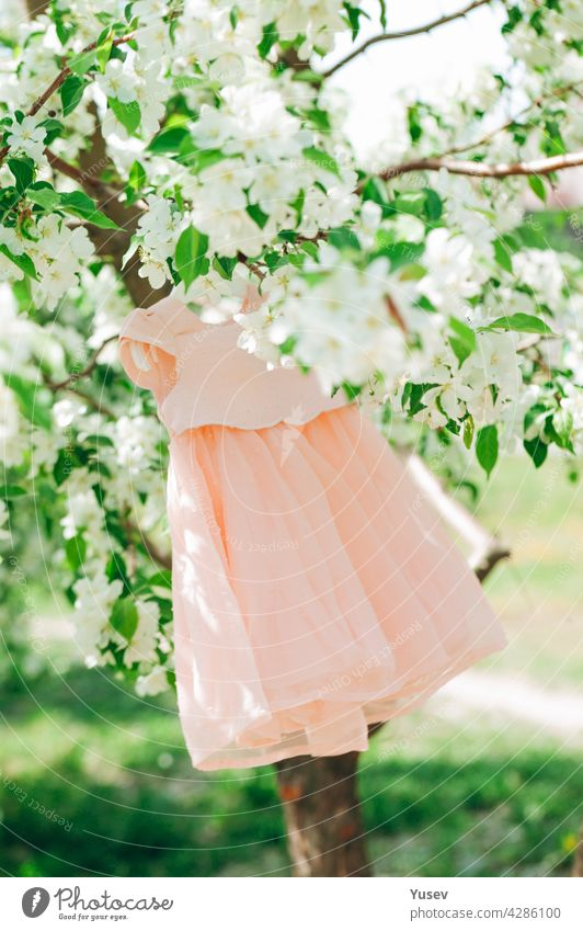 Elegance stylish peach-colored baby dress hangs on a blossoming apple tree. Green background. Spring time. Blooming apple orchard. Spring concept of renewal of nature, positive emotions. Vertical shot