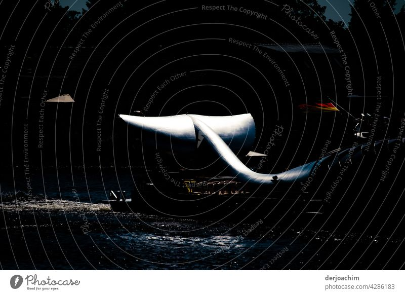 A whale is transported on a ship. The dorsal fins are illuminated by the sun.the shore and the adjacent forest are in darkness. Fish Colour photo Deserted