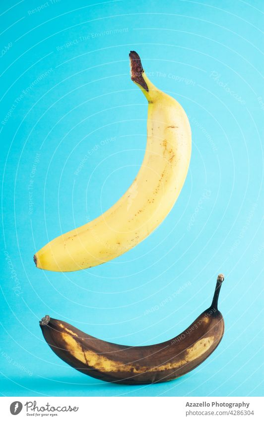 Fresh and rotten bananas on blue background. Real photo of a fresh banana levitating ob blue background. agriculture vegan health yellow old bad sweet uneatable