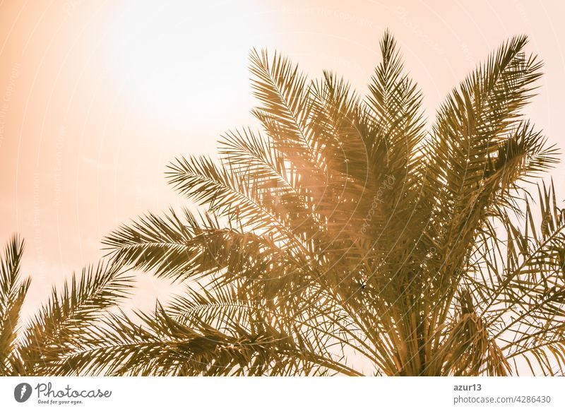 Tropical tourism paradise palms in warm sunny summer sun sky. Sun light shines through leaves of palm. Beautiful wanderlust travel journey symbol for vacation trip to southern holiday dream island