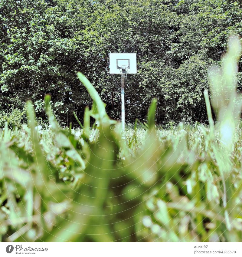 Non-urban court The Jungle Court Basketball Net plants Forest non-urban Green Climate Climate change