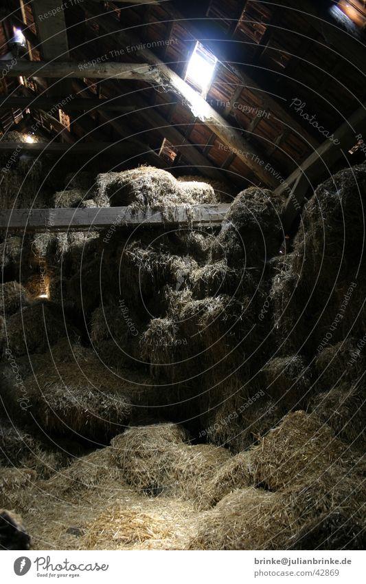 Dark Floor covering Farm Craft (trade) Attic Straw Storage Krefeld