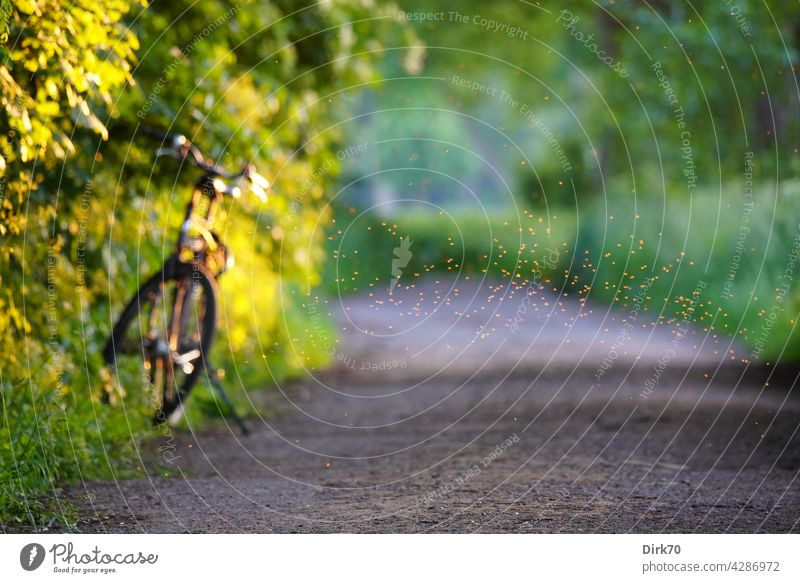Summer mood: Bicycle on the roadside with swarm of flies Summery Cycling bike tour bike break blurriness Exterior shot Colour photo Day Deserted Green Mobility