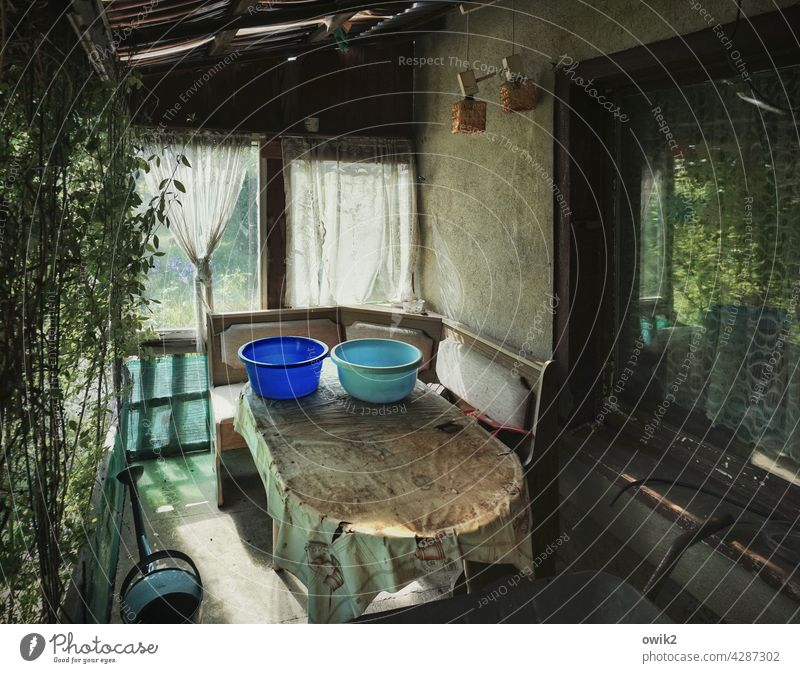 veranda Gardenhouse Private sphere Garden allotments Detail Muddled Contentment Growth Hut Window Bushes Rustic Deserted Colour photo Leisure and hobbies Idyll