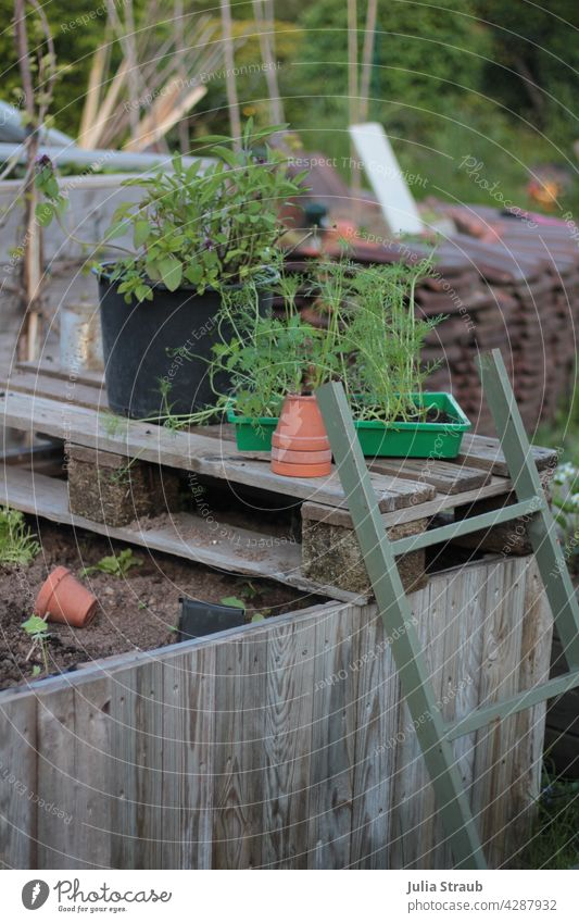 Garden with raised bed and ladder Ladder Metal Clay pot Earth Ground plants Cosmea Sage Nature permaculture Suntrap Bamboo stick brick Spring Summer Vine out