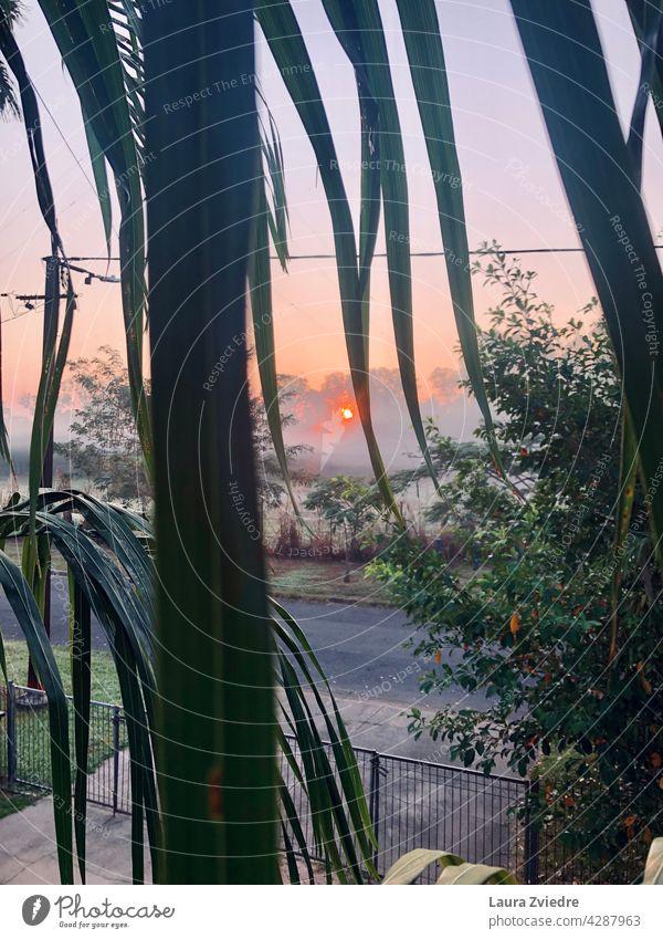 Sunrise and morning mist through palm tree leaves misty Morning Morning fog Fog foggy Tree landscape Sunlight Nature scenery outdoor season environment
