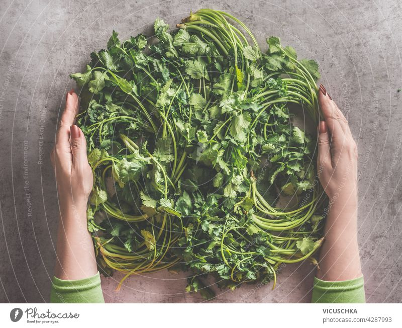 Woman hands shaping fresh herbs to circle on dark concrete background. Cooking preparation with healthy ingredients. Food concept. Top view cooking food concept