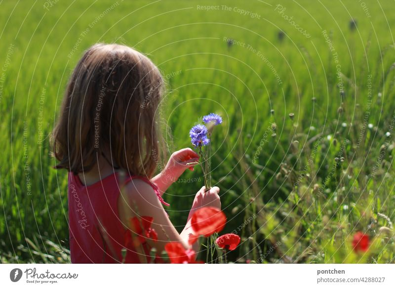 a girl sits in the field and picks a bouquet of flowers. Birthday, Mother's Day pick flowers Pick Child Field Infancy Nature Joy delight Donate Concentrate