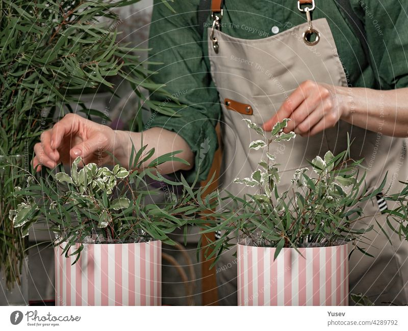 Graceful female hands of the florist make gift bouquets in hat boxes. Florist workplace. Small business concept. Front view. Flowers and accessories graceful