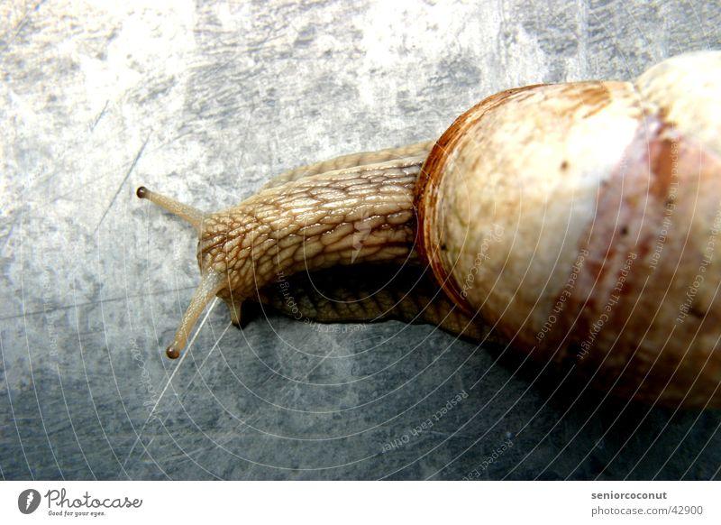 Snail Feeler Reptiles Snail shell Mucus