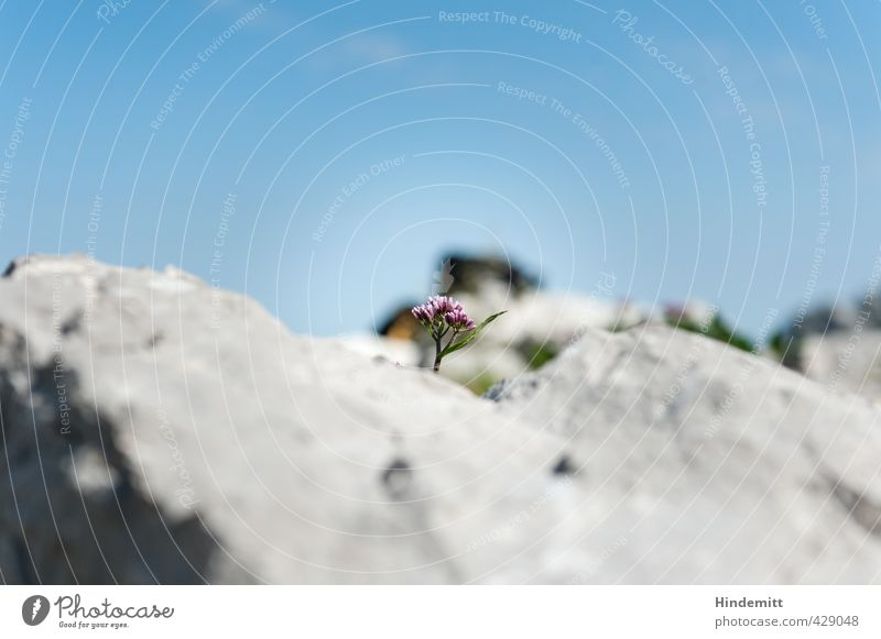 brick wall ääh: Rock floret Environment Nature Plant Sky Clouds Beautiful weather Flower Blossom Wild plant Alps Stone Stand Esthetic Sharp-edged Firm Small
