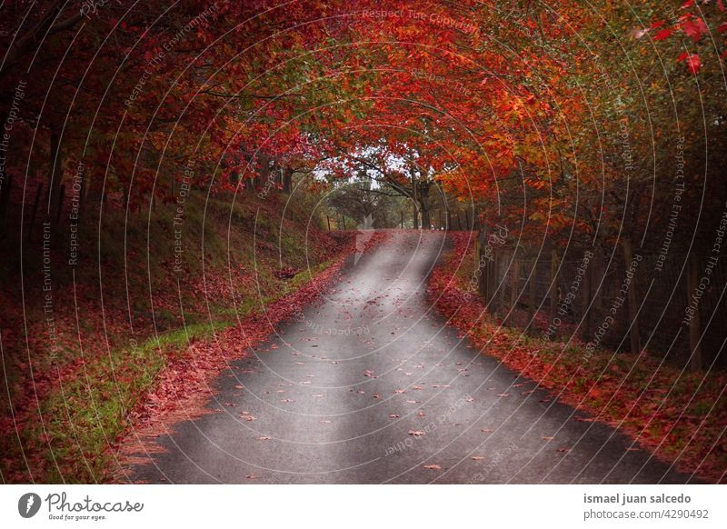 road with brown and red vegetation in autumn season path forest trees yellow leaves branches mountain walkway wooden rural scene foliage nature landscape travel