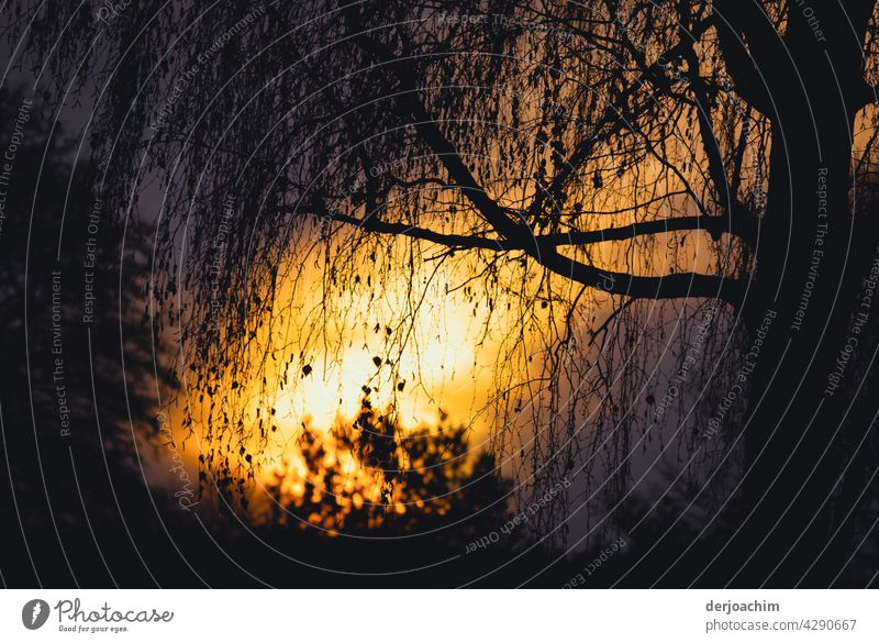 The setting evening sun is reflected on the pond between a tree and a bush. Evening sun Sunset Nature Exterior shot Silhouette Colour photo Water Dusk Deserted