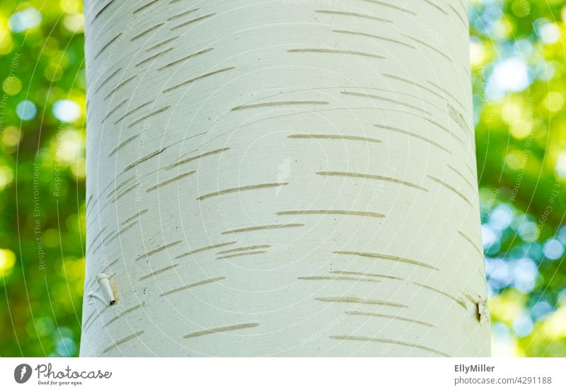 Close up of a birch bark. Trunk of a birch tree with green background. Birch tree Birch bark Tree Tree bark Close-up Green texture White Pattern Nature