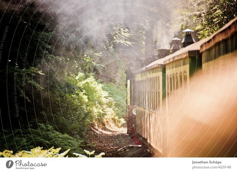 Vacation & Travel Old Green Sun Forest Environment Travel photography Idyll Transport Railroad Historic Smoke Chimney Dreamily Rügen Passenger traffic