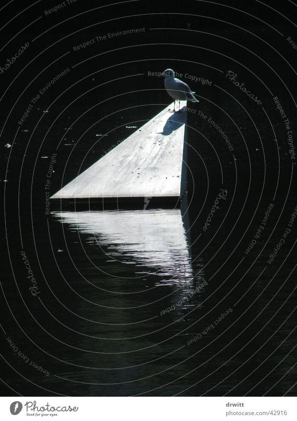 dove Pigeon Triangle Back-light Reflection Bird Park Transport Pyramid Water