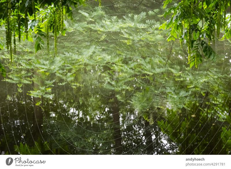 Trees are reflected in a smooth surface of water abstract Background beautiful beauty bright calm concept copy space environment forest framed fresh green lake