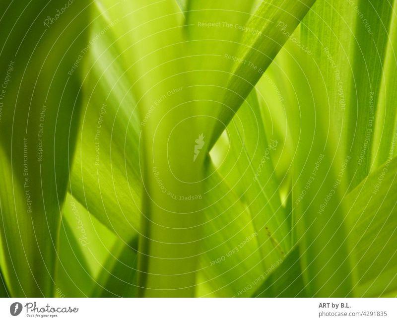fast wie gemalt... blatt blätter fotokunst grün grünes zart grün übereinander untereinander natur pflanze hintergrund