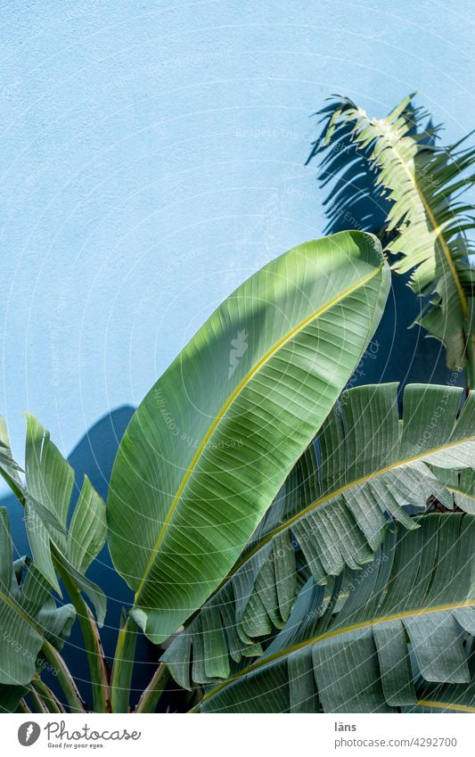 palm Palm tree Green Leaf Palm frond Plant Deserted Day Vacation & Travel Foliage plant Crete Tree