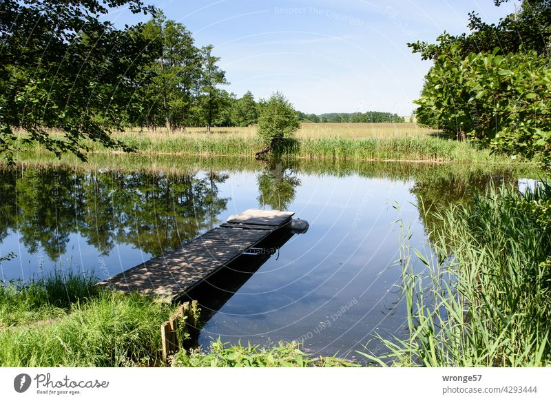 The Warnow river with both banks and a wooden jetty projecting diagonally into the middle of the river under a summery blue sky. Warnov River Nature Idyll