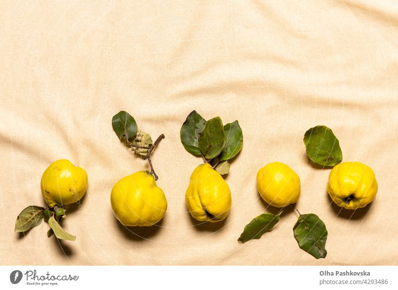 Row of quince apples on linen with copy space above natural organic imperfect background juicy vegetarian lay leaf vegan nature nutrition table quince fruit raw