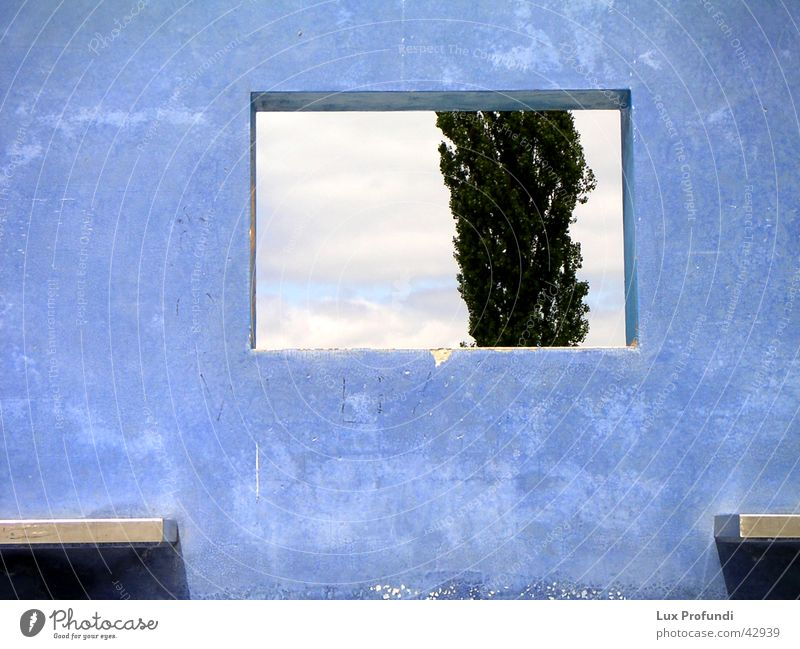 Tree Blue Wall (building) Window Wall (barrier) Art Architecture Modern Exhibition Hannover Work of art Concrete wall World exposition