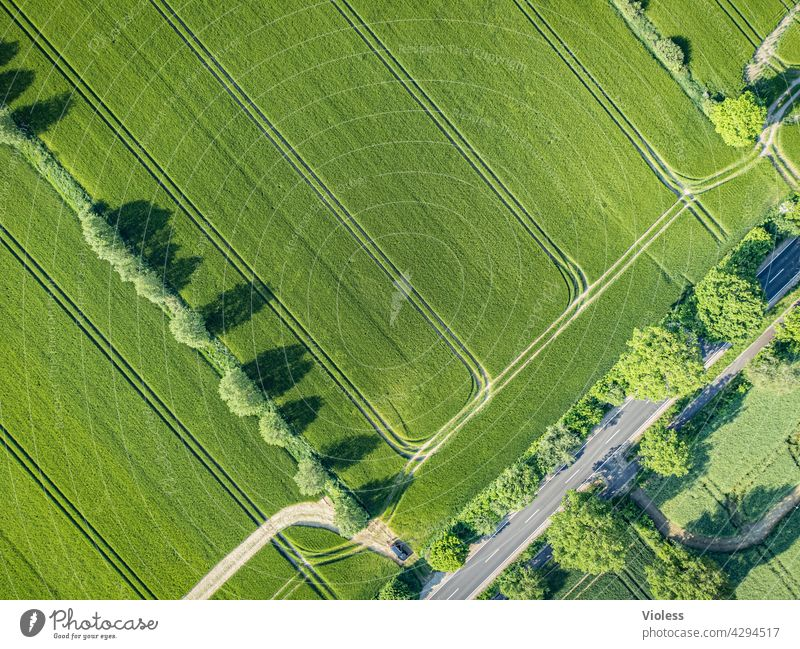 tracks in the field Field trees structures from on high Tracks Harvest Agriculture agrarian Country road Bird's-eye view Agricultural crop Grain trace reap