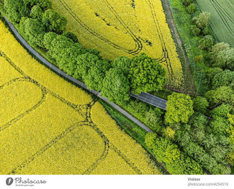 Bird's eye view II Milkwort family Reps Lewat Field trees structures from on high Tracks Blossom Harvest Agriculture Yellow Agricultural crop agrarian