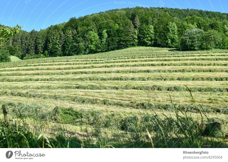 freshly mown grass on a slope Hay Harvest Hay harvest Grass grasses Summer warm ardor Temperature Dry Meadow Willow tree flowers Rhön Field Agriculture