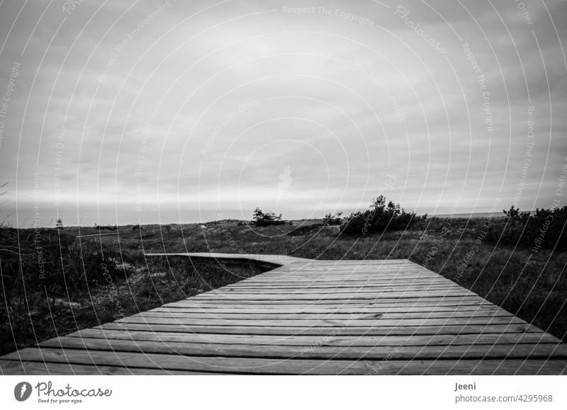 Wooden footbridge through the area Woodway by hook or by crook be off the track Footbridge wooden walkway Lanes & trails path duene Baltic Sea Darss