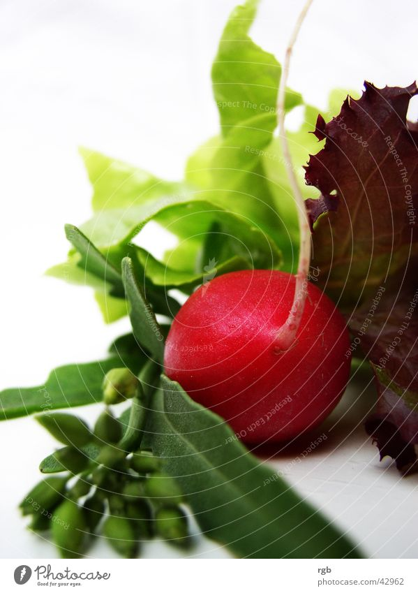 Green Red Healthy Vegetable Wellness Violet To enjoy Vitamin Lettuce Crunchy Radish Lollo rosso