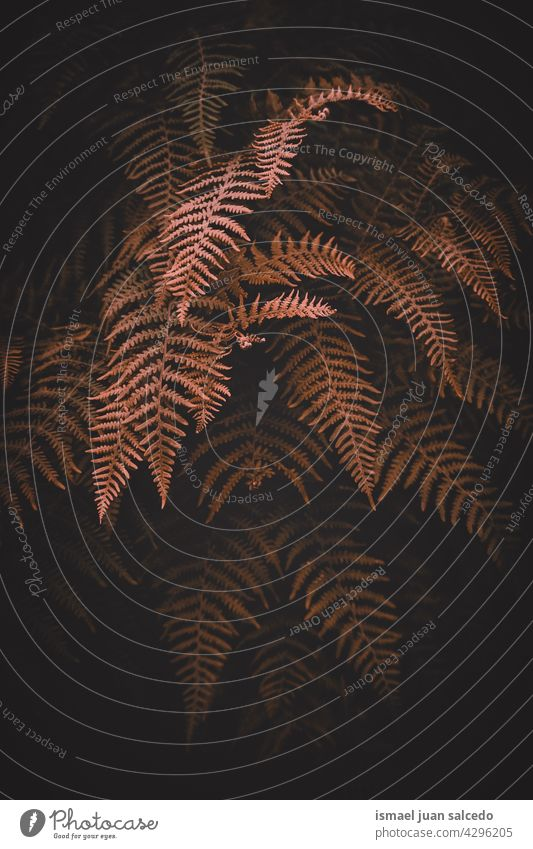 brown fern leaves in the nature in autumn season plant leaf abstract texture textured garden floral decorative outdoors fragility background natural