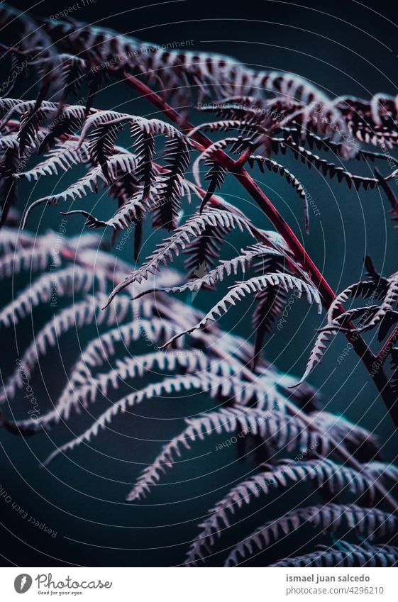 purple and pink fern leaves in autumn season plant leaf abstract texture textured garden floral nature decorative outdoors fragility background natural