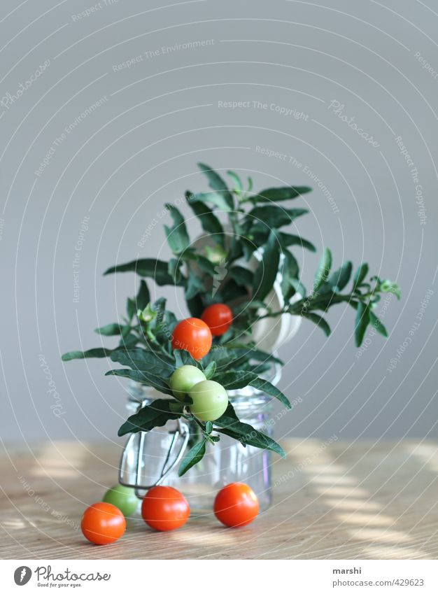 Green Plant Red Eating Bushes Decoration Nutrition Vegetable Delicious Still Life Tomato Bush tomato Tomato plantation
