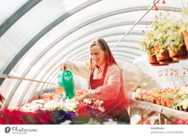 Professional girl gardener grows flowers in a greenhouse. Daily care of plants. Garden center, flower shop growth watering flower pot garden center nature