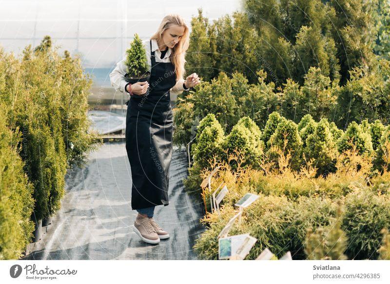 A girl gardener checks coniferous plants in the garden center in early spring. Landscape design. Tree planting season. garden shop landscape design evergreen