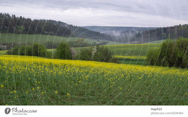 Landscape in spring at the rape blossom Nature Close-up Rural Field Arable land acre Sky Tree Exterior shot Blue Deserted Day Colour photo Sunlight Weather