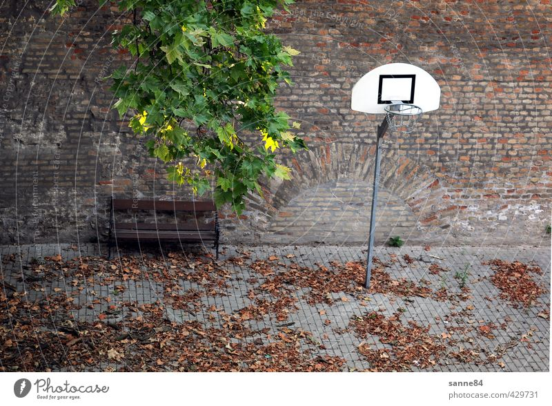 still lifes Sports Basketball basket Bench Ball sports Schoolyard Leaf Places Playground Wall (barrier) Wall (building) Courtyard Stone Metal Relaxation