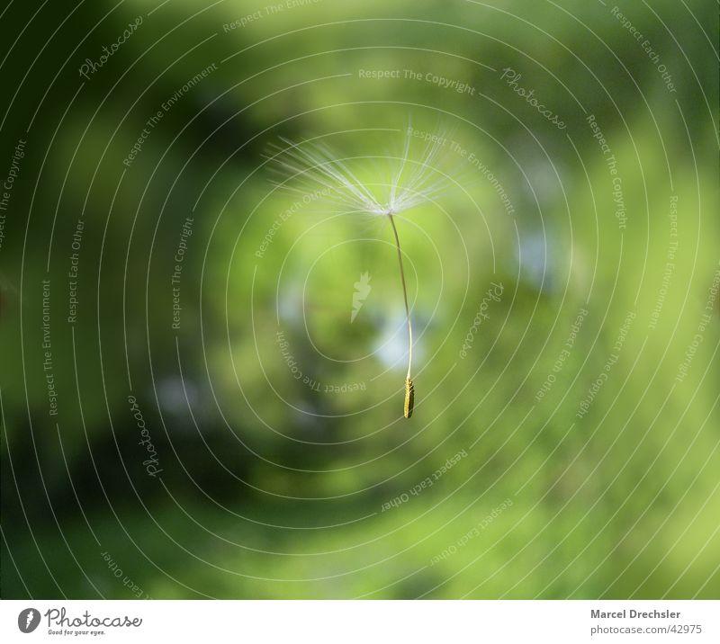 Wind Flying Dandelion Easy Seed Hover Parachute Flower